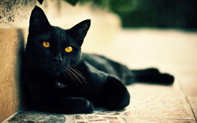 6914641-black-cat-photo (1)