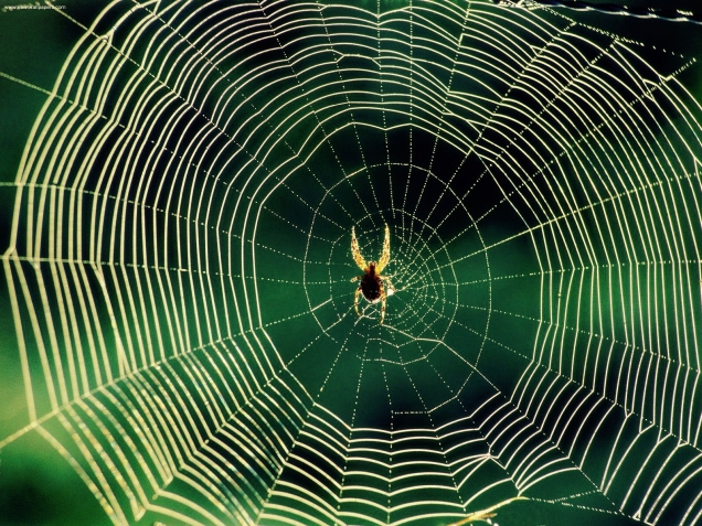 waiting_spider_web (1)
